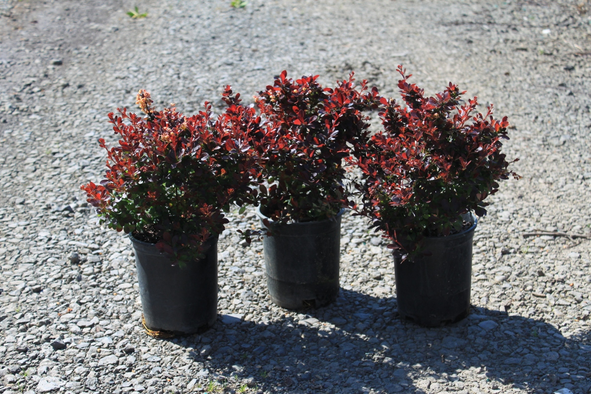 find plants page 4 wholesale nursery supplies u0026 plant growers