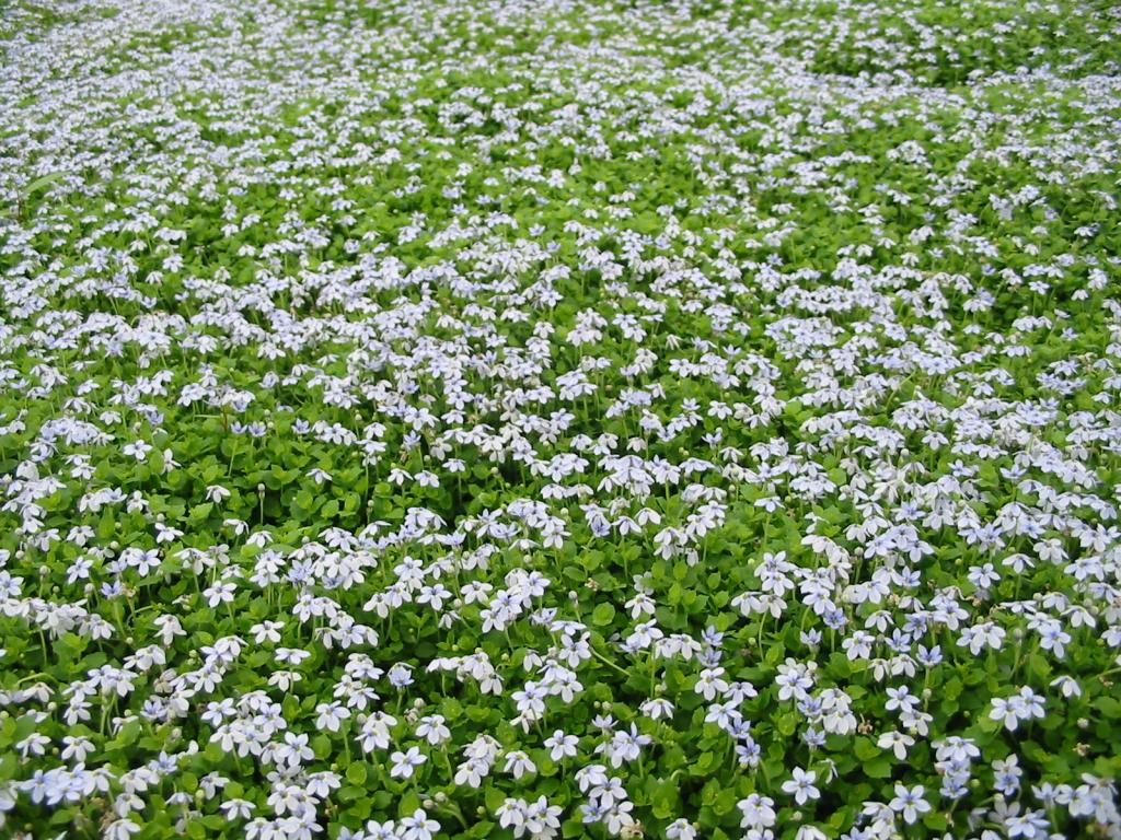 Ground Covers & Climbing Plants (generic)