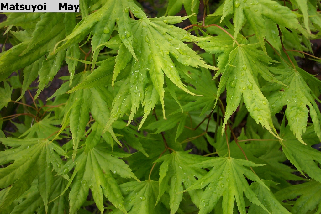 Find Plants Page 5 Wholesale Nursery Supplies Plant Growers In