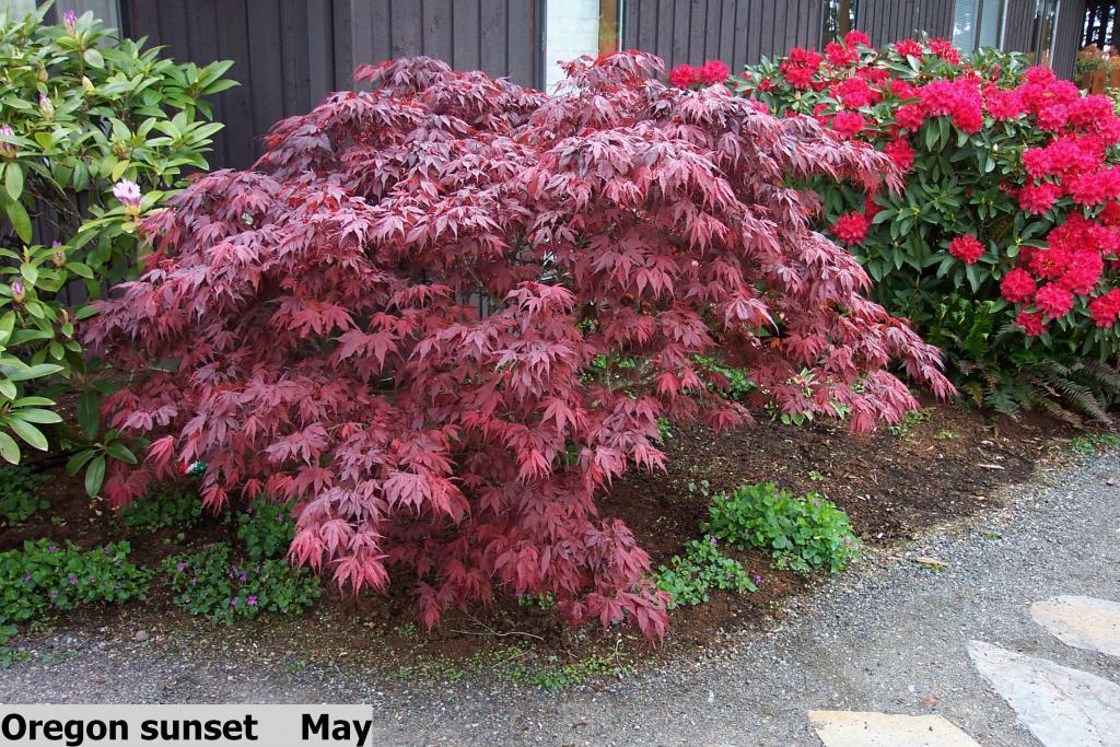 Oregon Christmas Tree Growers