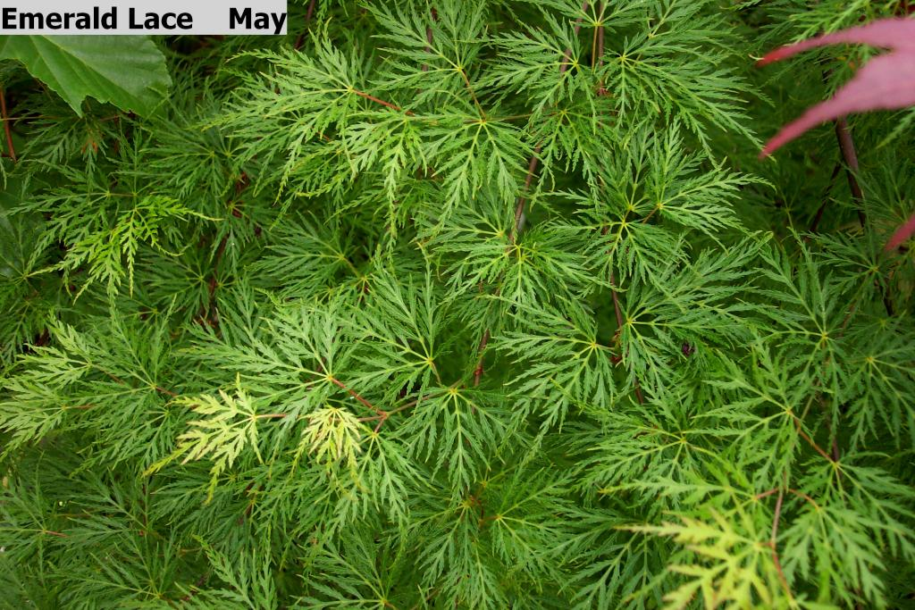 Find_Plants on Tropical Ornamental Trees