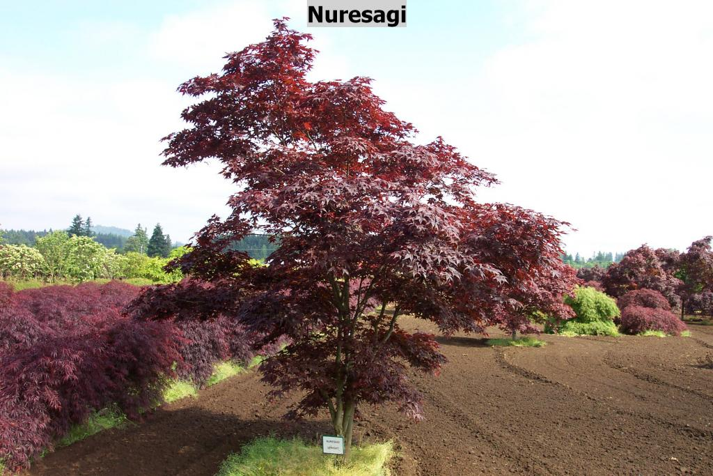 Find Plants Page 9 Wholesale Nursery Supplies Plant Growers In