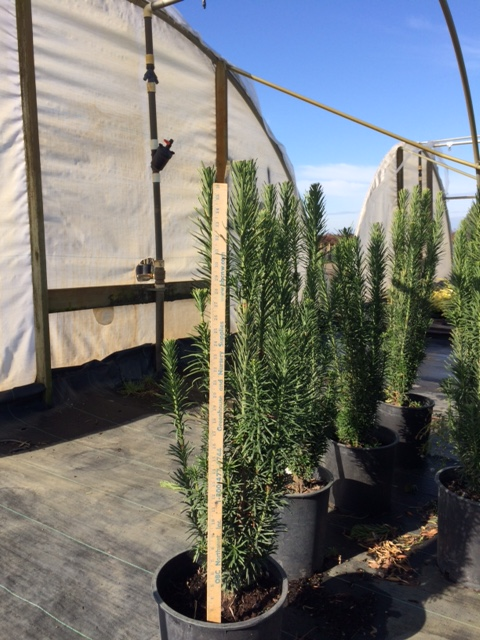 Find Plants Page 5 Wholesale Nursery Supplies Plant Growers In Oregon Nursery Guide