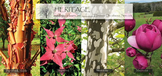 Heritage Seedlings & Liners Inc.