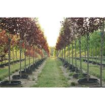 Brentano's Tree Farm LLC