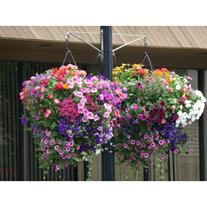 Country Garden  Nursery LLC