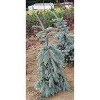 Palmer Creek Nursery LLC