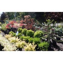 Harold M Miller Landscape Nursery